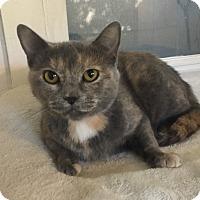 Adopt A Pet :: Heidi - Mount Pleasant, SC