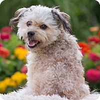 Adopt A Pet :: Howie - Boise, ID
