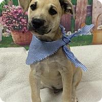 Adopt A Pet :: TUCKER - Fort Pierce, FL