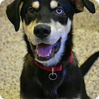 Adopt A Pet :: Togo - Aiken, SC