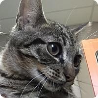 Adopt A Pet :: Zazu - Friendswood, TX