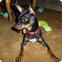 Adopt A Pet :: Sampson - Malaga, NJ