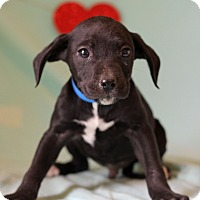 Adopt A Pet :: Joseph - Waldorf, MD