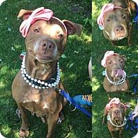 Adopt A Pet :: Vectra - Mt. Pleasant, MI