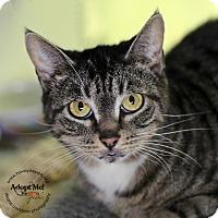 Adopt A Pet :: Sydney - Lyons, NY