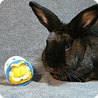 Adopt A Pet :: Rocco - Newport, DE