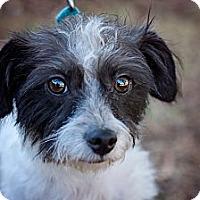 Adopt A Pet :: Penny - Sherman Oaks, CA