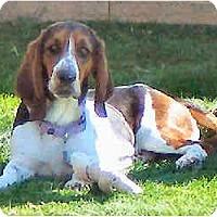 Adopt A Pet :: Thelma Lou - Phoenix, AZ