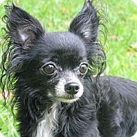 Adopt A Pet :: Pharah - Villa Rica, GA