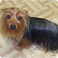 Adopt A Pet :: Darby - Conroe, TX