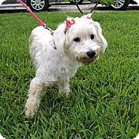 Adopt A Pet :: Julie - Davie, FL