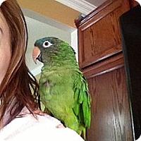 Adopt A Pet :: Ricky - St. Louis, MO