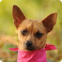 Adopt A Pet :: Sienna sweetie - video! - Los Angeles, CA