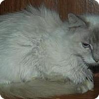 Adopt A Pet :: Angela - Ennis, TX