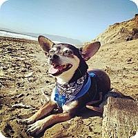 Adopt A Pet :: Bates - San Francisco, CA