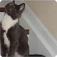 Adopt A Pet :: Davey - Xenia, OH