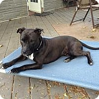 Adopt A Pet :: Princess - Courtesy Post - Rochester/Buffalo, NY