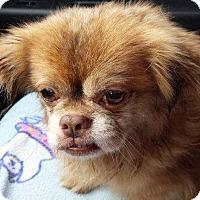 Adopt A Pet :: Ozzy - Medina, OH