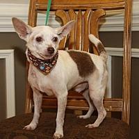 Adopt A Pet :: Mikey - Matthews, NC