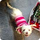 Adopt A Pet :: Fluffy