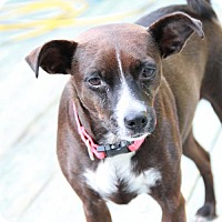 Adopt A Pet :: Colleen - Morganville, NJ