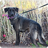 Adopt A Pet :: Summer - Clarksville, TN