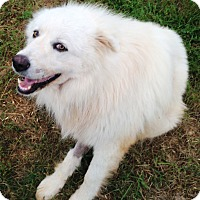 Adopt A Pet :: Wolfe - Kyle, TX
