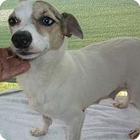 Adopt A Pet :: Blessing - Bonifay, FL