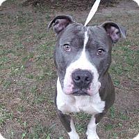 Adopt A Pet :: Rowdy - Muskegon, MI