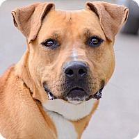 Adopt A Pet :: Trey - ADOPTED! - Zanesville, OH