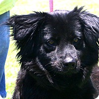 Adopt A Pet :: Little One~meet me~ - Glastonbury, CT