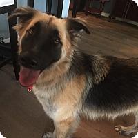 Adopt A Pet :: Trixie - Dripping Springs, TX