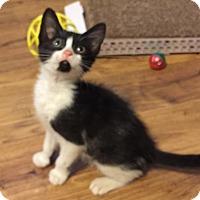 Adopt A Pet :: Janet - Gainesville, FL
