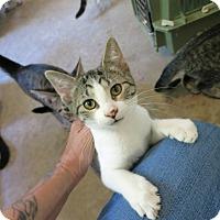 Adopt A Pet :: Dottie - Geneseo, IL