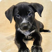 Adopt A Pet :: Buzz- Currently in Foster - Roanoke, VA