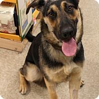 Adopt A Pet :: River - Yuba City, CA