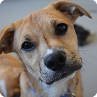Adopt A Pet :: *Arrow - PENDING - Westport, CT