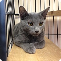 Adopt A Pet :: Caine - East Brunswick, NJ