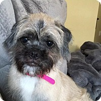 Adopt A Pet :: Sophie - Hazard, KY