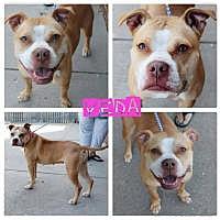 Adopt A Pet :: Veda - Garden City, MI