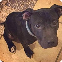 Adopt A Pet :: Austin - Dayton, OH