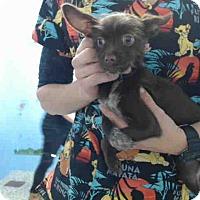 Adopt A Pet :: URGENT on 12/3 SAN BERNARDINO - San Bernardino, CA