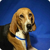 Adopt A Pet :: *CHEYANNE - Ocala, FL