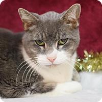 Adopt A Pet :: Grayling - $25! - Midland, MI