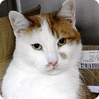 Adopt A Pet :: Alan - Castro Valley, CA
