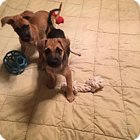 Adopt A Pet :: Buddy - Pittsburgh, PA