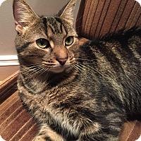 Adopt A Pet :: Whiskey - Toronto, ON