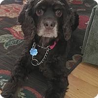 Adopt A Pet :: Maggie - Oakhurst, NJ