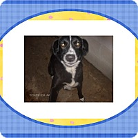 Adopt A Pet :: JULIE - KELLYVILLE, OK