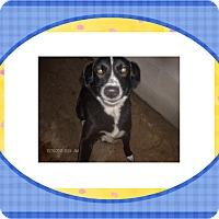 Adopt A Pet :: JULIE - KELLYVILLE, OK